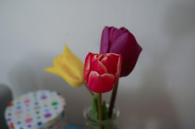 Tulipes printanières