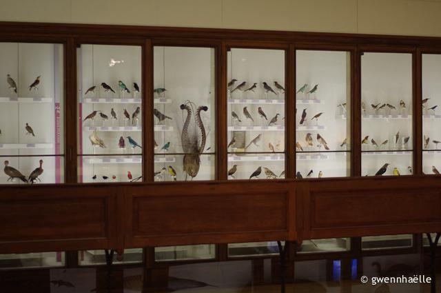 2012-12-06_15-museum-blog