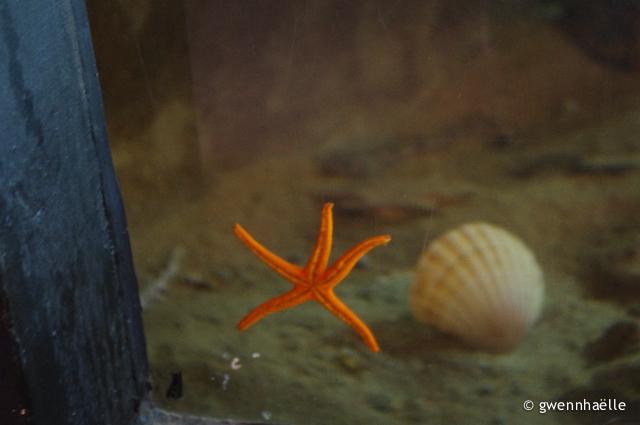 2013-05-19_48-Perros-Guirec_Aquarium-blog