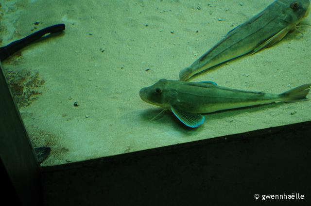 2013-05-19_59-Perros-Guirec_Aquarium-blog