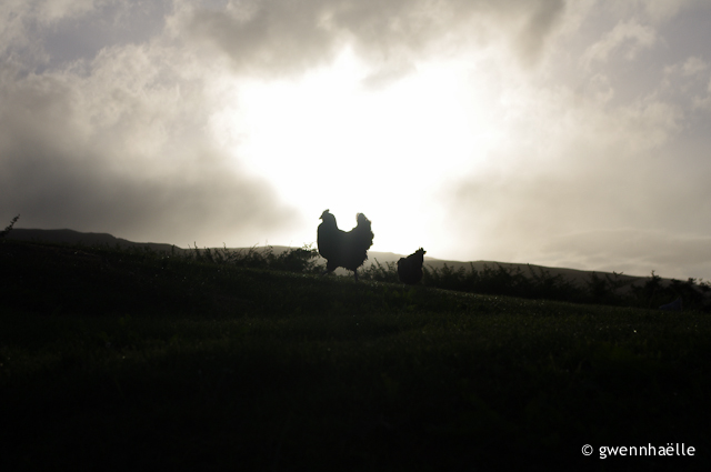 2014-07-02_42-Camping_Oban-poule_coucher_soleil-blog