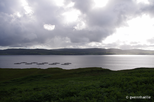2014-07-06_47-Isle_of_Skye-saumons-blog