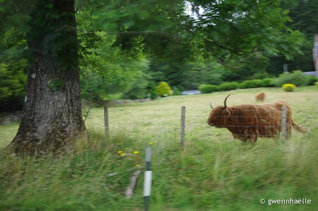 2014-07-08_19-Highland_paparazzi-blog