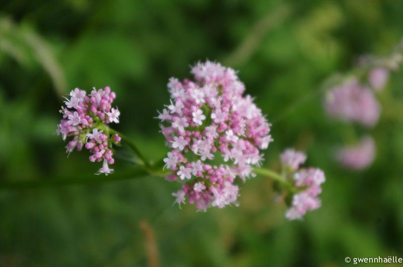 2014-07-02_37-camping_oban-fleurs-blog